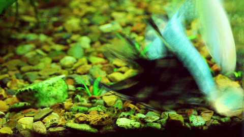 feeding the fish in aquarium - timelapse Stock Video Footage