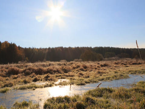 Dawn over the frozen swamp. Panorama. Time Lapse Stock Video Footage