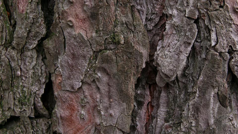 TREE BARK Stock Video Footage