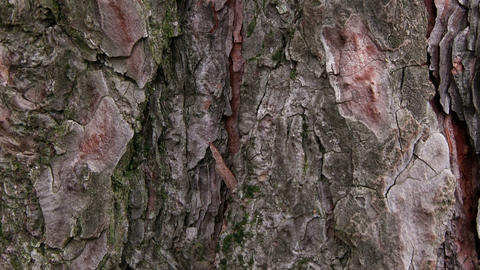 TREE BARK stock footage