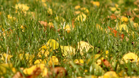 leaves on grass Stock Video Footage