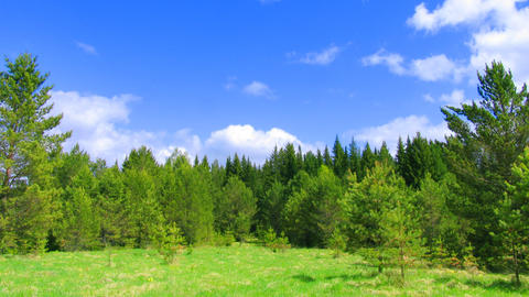 summer nature scene get covered by frost pattern Stock Video Footage
