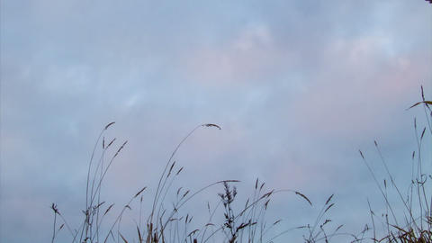 Overcast on the grass. Sunset. Time Lapse Stock Video Footage