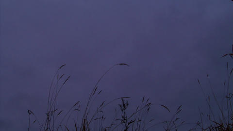 Overcast on the grass. Sunset. Time Lapse Footage