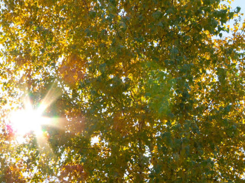 Sun behind birch branches. Time Lapse Stock Video Footage