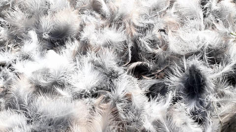 Bright Bird Feathers stock footage