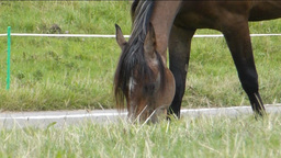 Horse eating grass on an open grassland (Horse eat Stock Video Footage