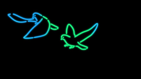 neon bird color Stock Video Footage