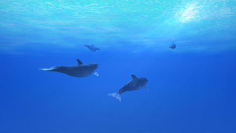 Dolphin Sea B HD CG動画