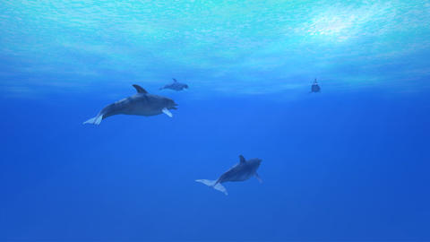 Dolphin Sea B HD Stock Video Footage