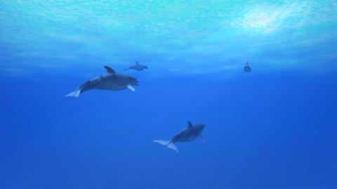Dolphin Sea B HD Stock Video Footage