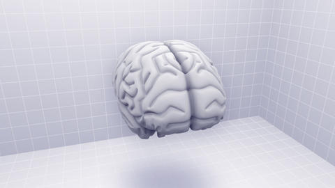 Brain Ca HD Animation
