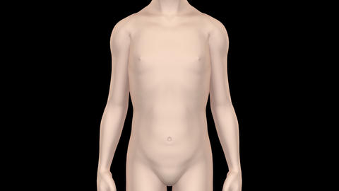 Medical Body KsF Animation