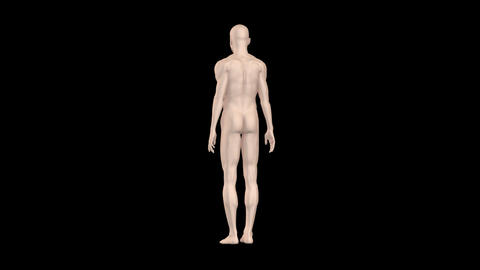 Medical Body MsA Animation