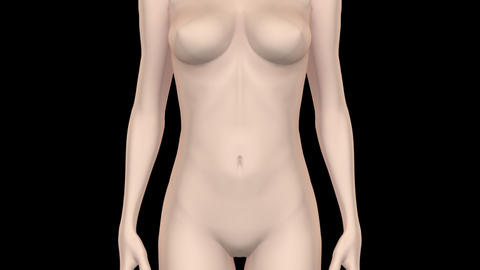 Medical Body WsF HD Animation