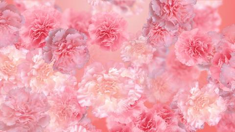 Flower 3 P1L HD Stock Video Footage