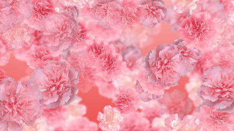 Flower 3 P2L HD Stock Video Footage