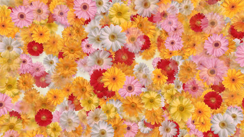 Flower 4 G2S HD CG動画素材