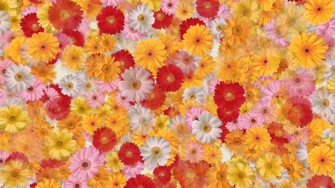 Flower 4 G2S HD Stock Video Footage