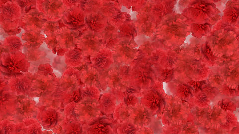 Flower 3 R1S HD Animation