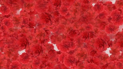 Flower 3 R1S HD Stock Video Footage