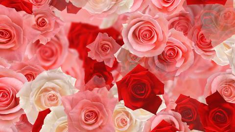 Flower 2 M2L HD Stock Video Footage