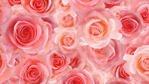 Flower 2 P1L HD Stock Video Footage