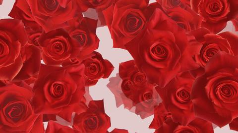 Flower 2 R1L HD Stock Video Footage