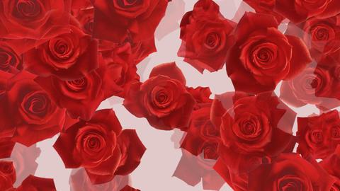 Flower 2 R2L HD Animation