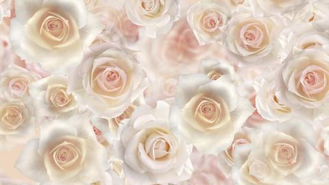 Flower 2 W2L HD Stock Video Footage