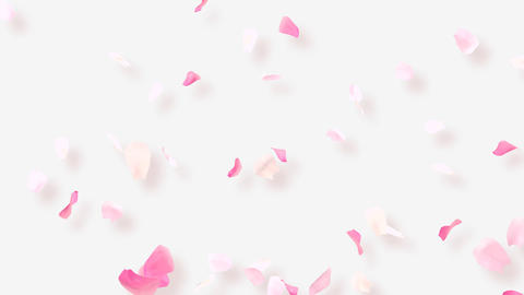 Rose Petals A2 Stock Video Footage