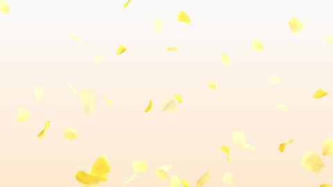 Rose Petals A3 Stock Video Footage