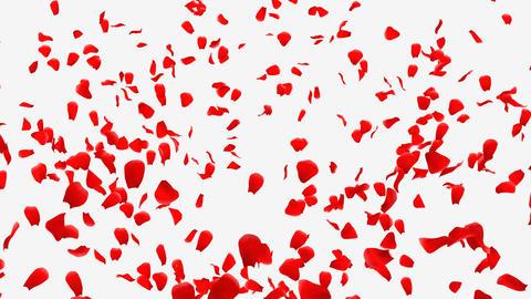 Rose Petals B1 Animation