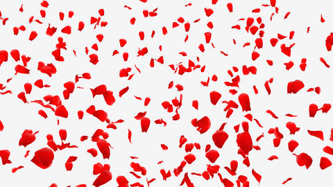 Rose Petals B1 Stock Video Footage