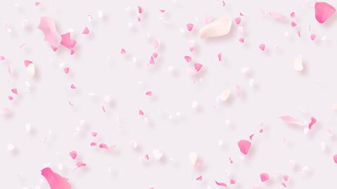 Rose Petals C2 Stock Video Footage
