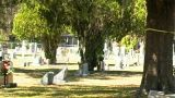 Female Ghost In A Cemetery (1) stock footage
