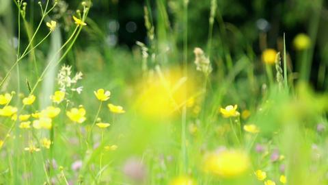 wildflowers Stock Video Footage