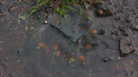 heavy rain drops - slow motion Stock Video Footage