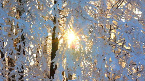 winter frozen birch woods and sun rising - timelap Stock Video Footage