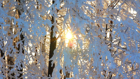 winter frozen birch woods and sun rising - timelap Footage
