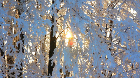winter frozen birch woods and sun rising - timelap Stock Video Footage