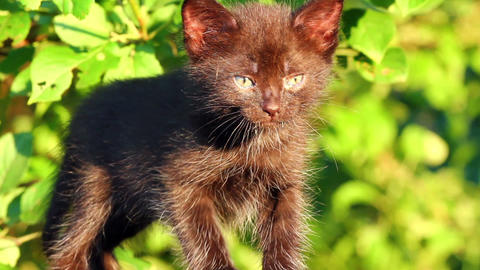 little black kitten plaintively mew outdoor Stock Video Footage