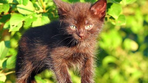 little black kitten plaintively mew outdoor Stock Video Footage