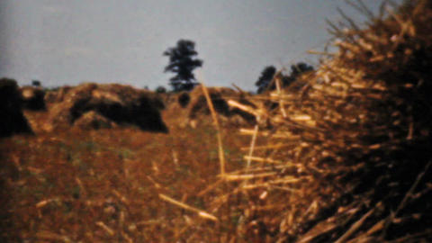 Farmers Fields And Golden Wheat In The Fall 1940 Stock Video Footage
