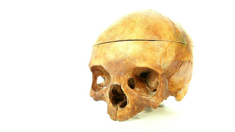 Human skull isolated on white background Stock Video Footage