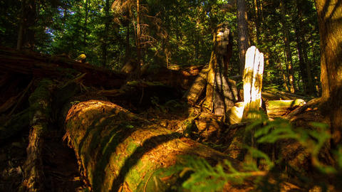 Sunset shadow in the forest Stock Video Footage