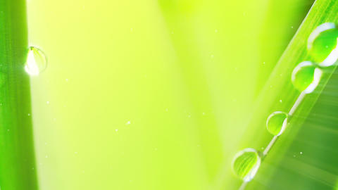water drop on grass extremely close-up loop Stock Video Footage
