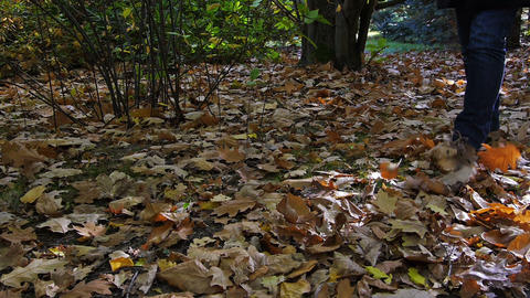 Walk on the leaves in park Footage
