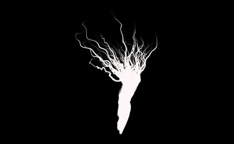 root Tree Animation