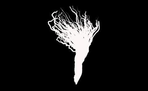 root Tree Stock Video Footage